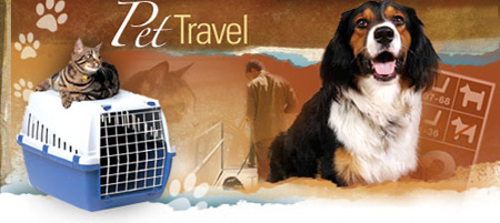 Pet Travel Tips, Destinations, Products